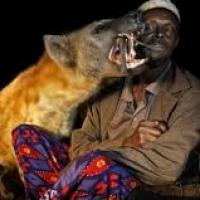 Eleveur hyene