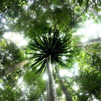 Foret tropicale mada