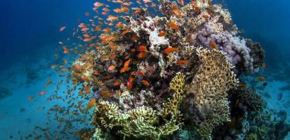 Recif coralien des pristines