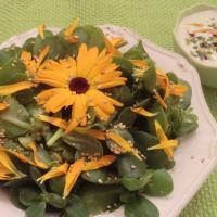 Salade souci