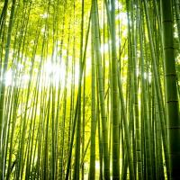 Foretde bambous