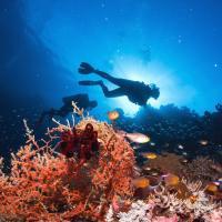 Jardins coraliens