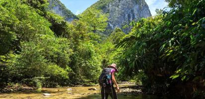 Jungle sarawack