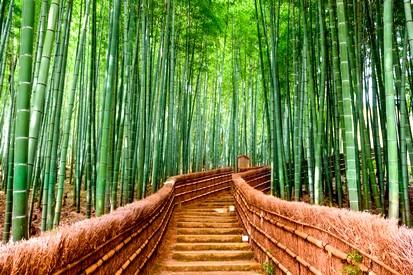 La foret de bambous d arashiyama