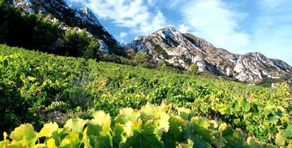 La route des vins 1
