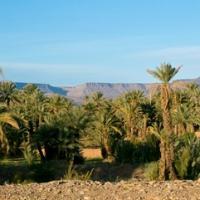 Palmeraies sud marocaines