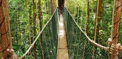 Parc national de taman negara passerelle canopee
