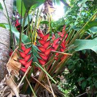 Plantes endemiques