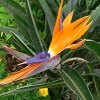 Plantes endemiques2