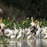 Reserve ornithologique de prek toal1