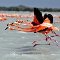 Reserve ornithologique de pulicat