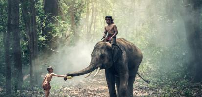 Royaume du million d elephants 1
